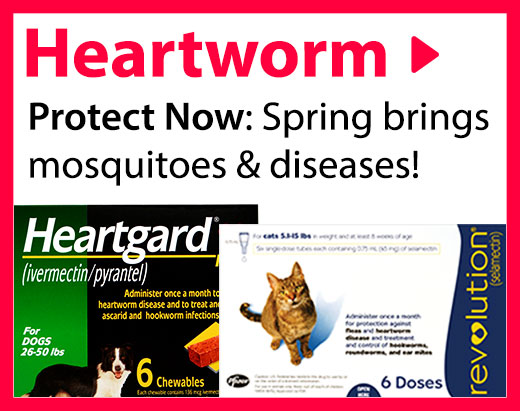 Heartworm - Protect now