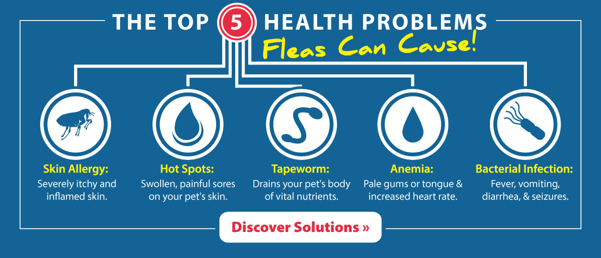 The top 5 health problems fleas can cause