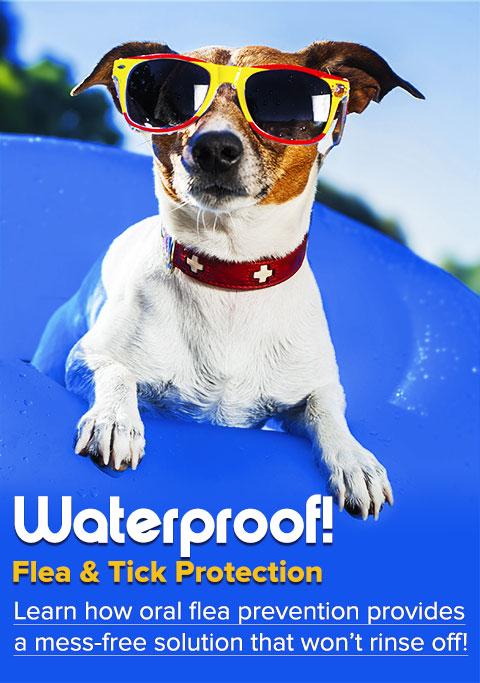Waterproof Flea & Tick Protection