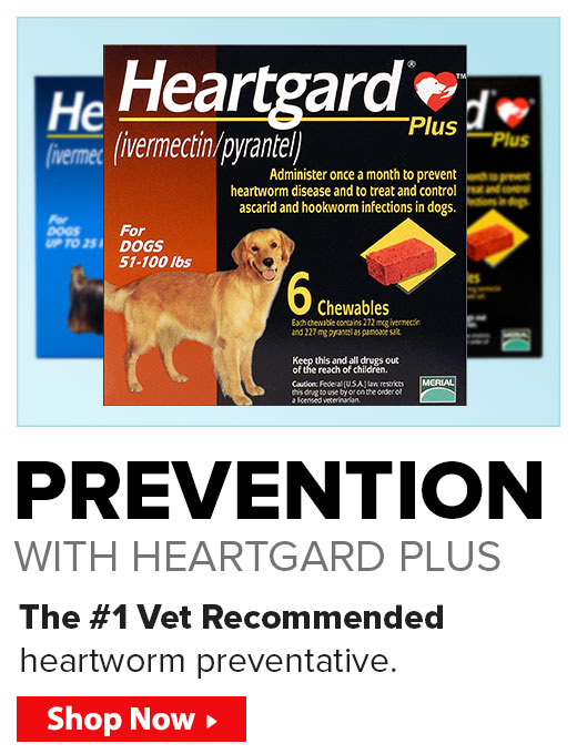 Prevention, with Heartgard Plus