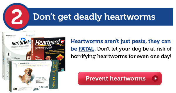 Don't get deadly heartworms