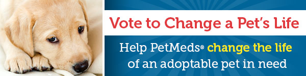 Vote to Change a Pet's Life