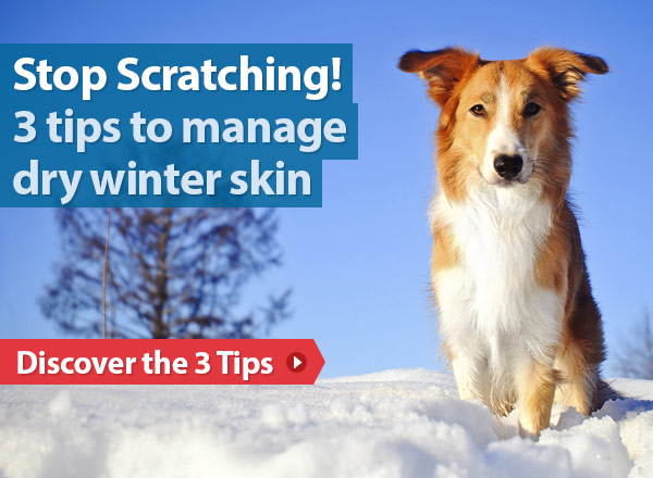 Stop Scratching! 3 tips to managing your dog's dry winter skin