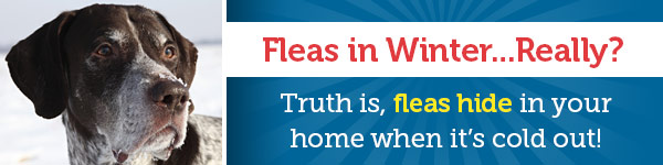 Fleas in Winter...Really? Truth is, fleas hide in your home when its cold out!