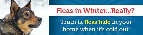 Fleas in Winter...Really?