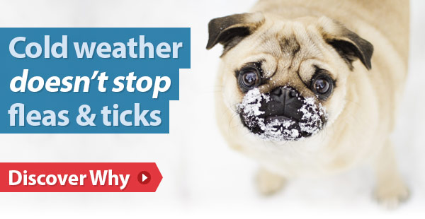 Cold weather doesn't stop fleas & ticks
