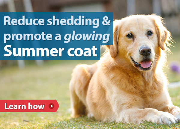 Reduce shedding & promote a glowing Summer coat