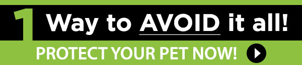 1 Way to AVOID it all! Protect your pet now!