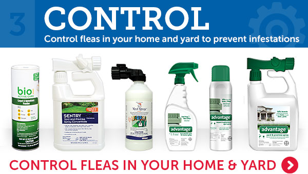 3. Control fleas in your home or yard to prevent infestations