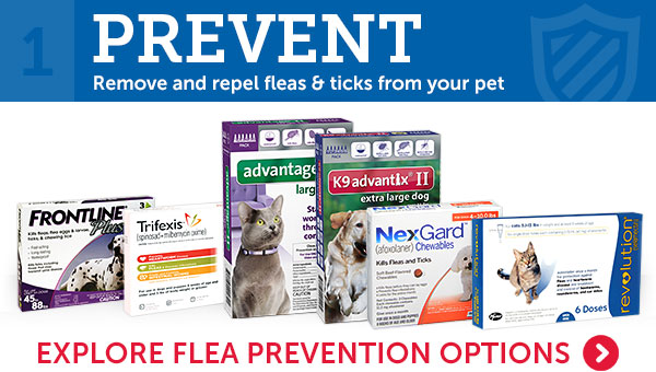 1. Remove and repel fleas & ticks from your pet