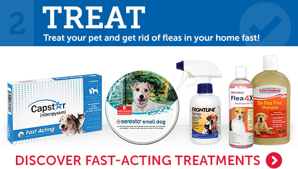 2. Treat your pet and get rid of fleas in your home fast!