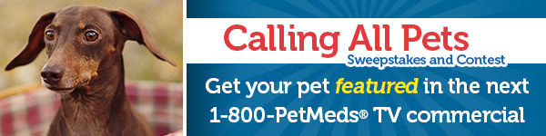 Get your pet featured in the next 1-800-PetMeds TV commercial