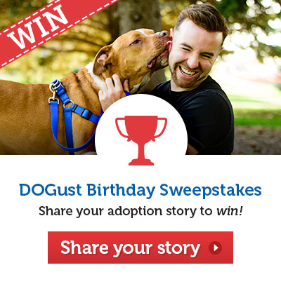 Share your adoption story to win!