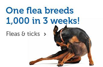 One flea breeds 1,000 in 3 weeks!