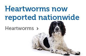 Heartworms now reported nationwide