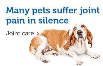 Many pets suffer joint pain in silence