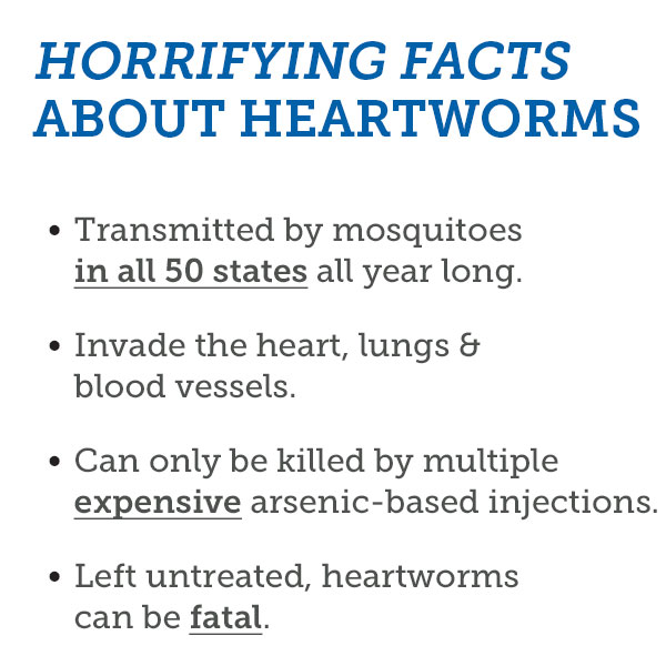 Horrifying facts about heartworms