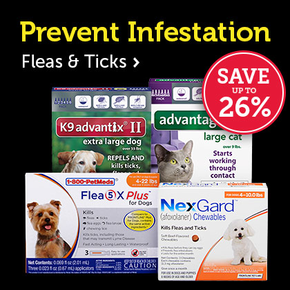 Prevent Infestation