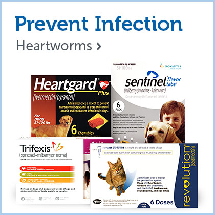 Heartworms & Worms