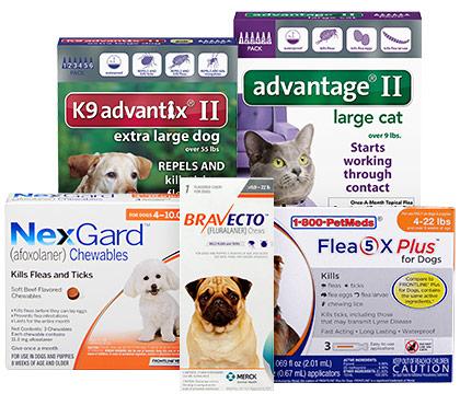 Kill & prevent fleas
