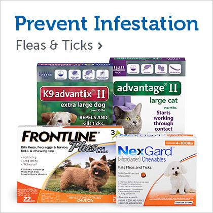 Fleas & Ticks