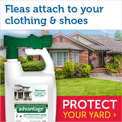 Protect your yard