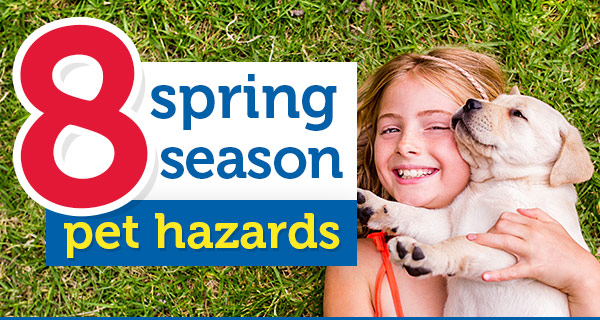 8 spring season pet hazards