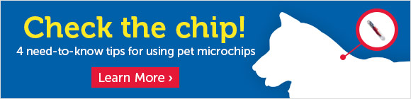Check the chip! 4 important things to do about pets & microchips