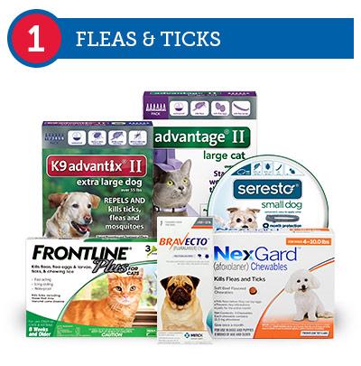 1. Fleas & Ticks