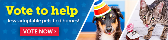 Vote now to help adoptable pets find homes!
