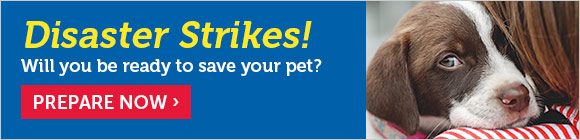 Disaster Strikes! Will you be ready to save your pet?