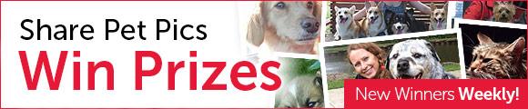 Share pet pics, win prizes!