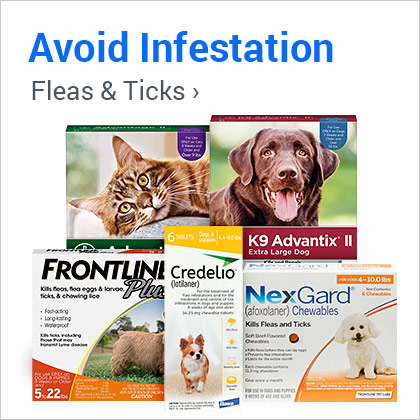 Prevent Infestation