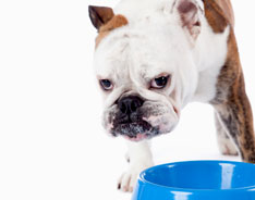 Weight Loss Pet Food Diet Pet Food 1800petmeds