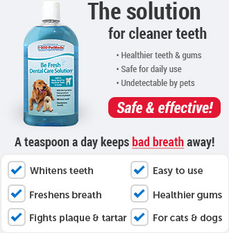 Be Fresh Dental Care Solution