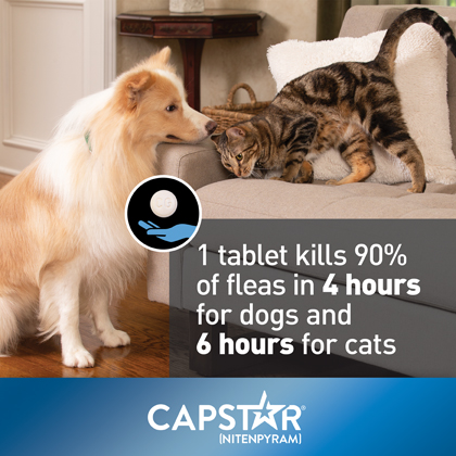Capstar Flea Treatment Tablets For Dogs And Cats 1800petmeds
