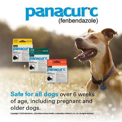 Panacur C for Dogs | Canine Dewormer - 1800PetMeds