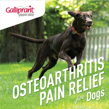 Galliprant For Dogs 20 Mg 60 Mg 100 Mg Tablets