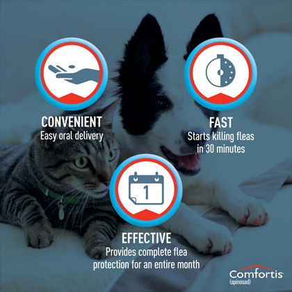 Comfortis for Dogs & Cats | Fast & Free Shipping - 1800PetMeds