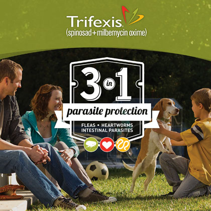 photograph about Trifexis Printable Coupon referred to as Trifexis Flea Heartworm Deal with No cost Shipping and delivery