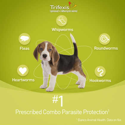 graphic relating to Trifexis Printable Coupon identify Trifexis Flea Heartworm Manage Cost-free Transport
