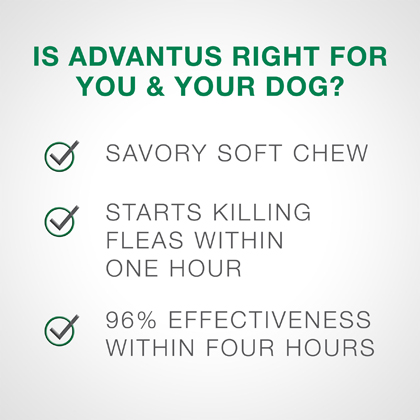 Advantus Oral Flea Treatment Soft Chews for Dogs 7.5 mg 7 ct  Thumbnail Image 2