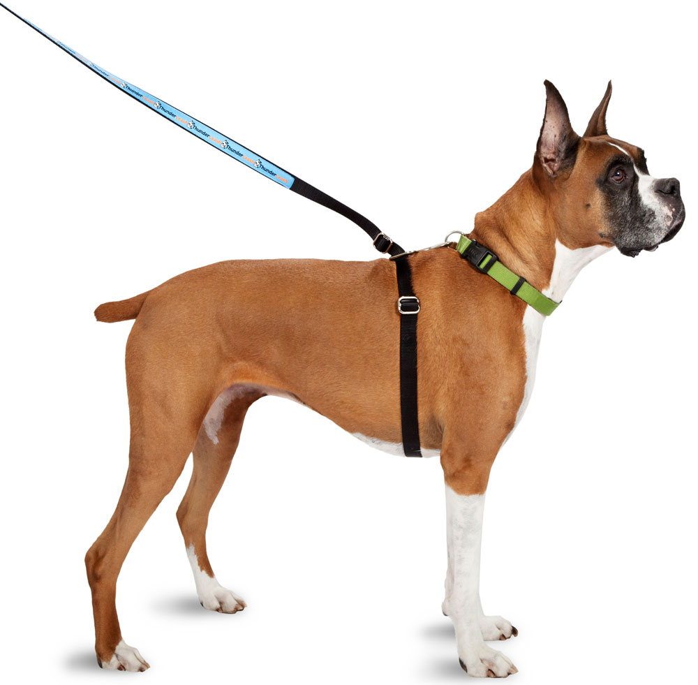 ThunderWorks ThunderLeash Large -  For dogs over 25 lbs Thumbnail Image 1