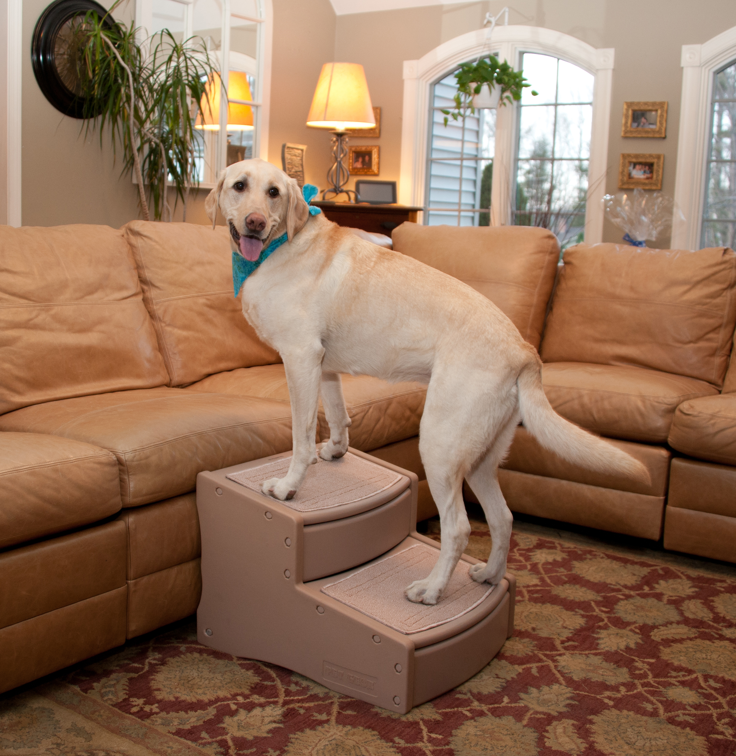 Pet Gear Extra Wide Easy Step II Pet Stairs   1800PetMeds