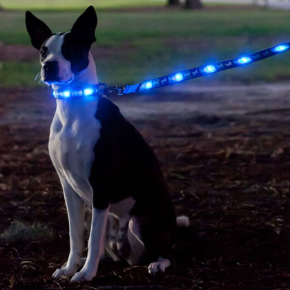 Dog-e Glow LED Collar & Leash (Click for Larger Image)