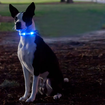 Dog-e Glow LED Collar (Click for Larger Image)