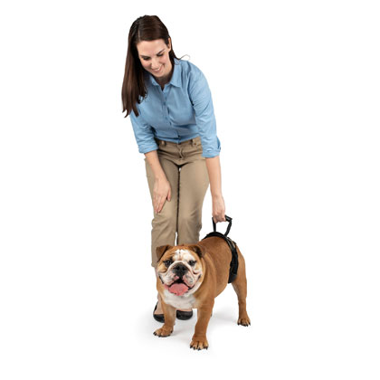 Rear Dog Lifting Harness (Click for Larger Image)