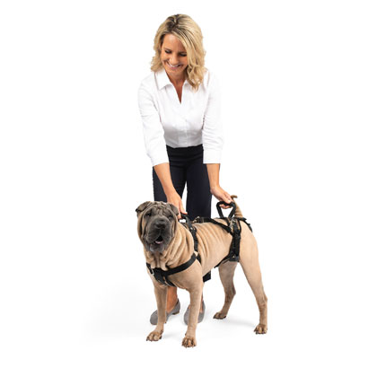 Full Body Dog Lifting Harness (Click for Larger Image)