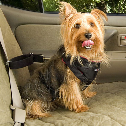 Solvit Dog Vehicle Harness
