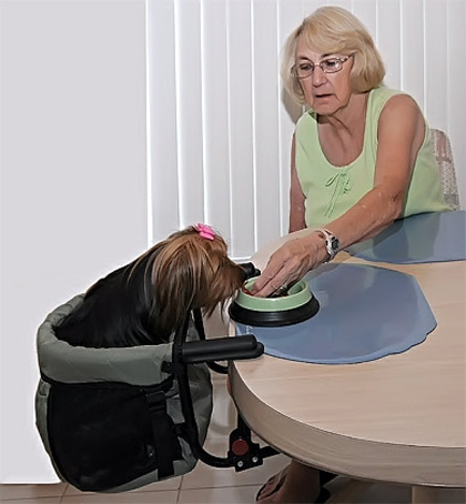 Dog High Chair Sage